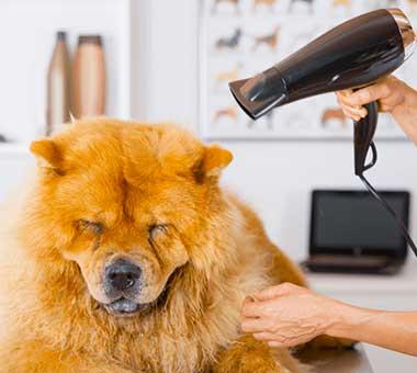 Frizerie canina